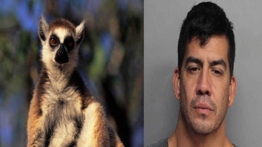 030618 Lemur Arrest False Report