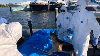 Deputies rescued a German Shepherd named Sassy from a boat after its owner was hospitalized with coronavirus