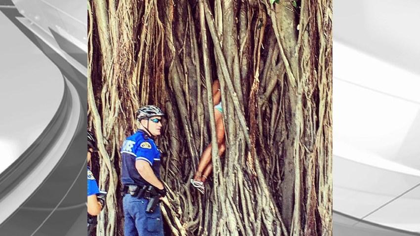 051016 woman stuck banyan tree key west