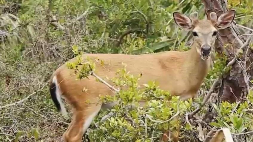 060218 deer