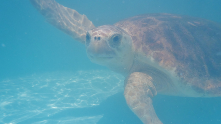 061313 hilary turtle