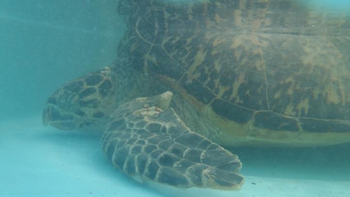 100212 good hope sea turtle