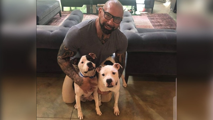 111419 rescue me tampa dave bautista pit bulls FINAL