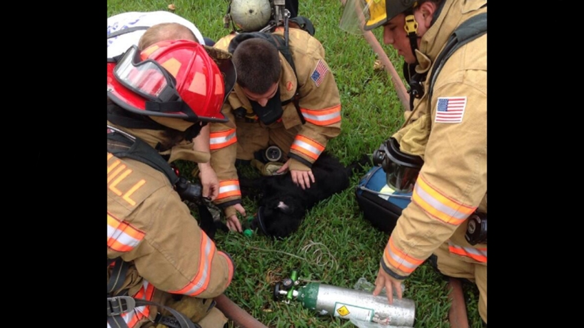 112713 lauderhill dog rescued firefighters