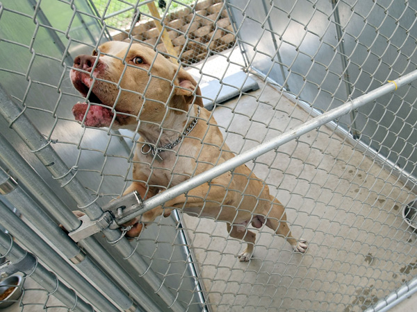 Federal Prison Employee Indicted in Florida Dogfighting Ring