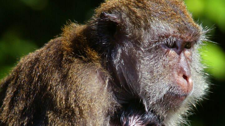 409513_03_monkey