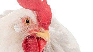 20131231 Chicken