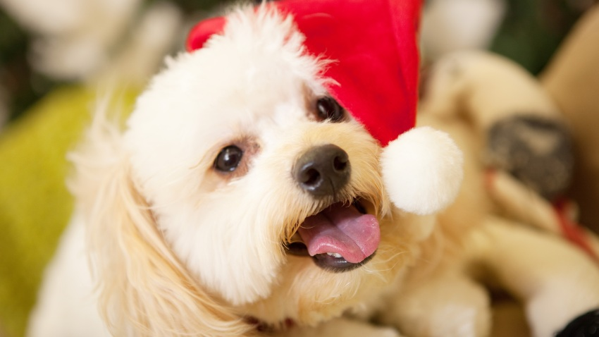 [UGCDFW-CJ-holiday]Christmas Pet Pictures