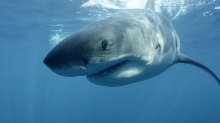 TV-Sharknado