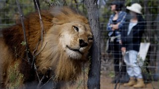 South Africa Lion Airlift