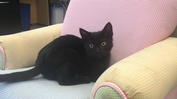 EB kitten