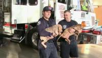Firefighters Save Puppies From Fiery Car Wreck