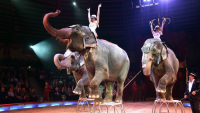 Florida Wildlife Refuge Taking in 30 Former Circus Elephants