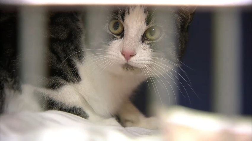 Pet Adoption Cat Generic Cat Cage