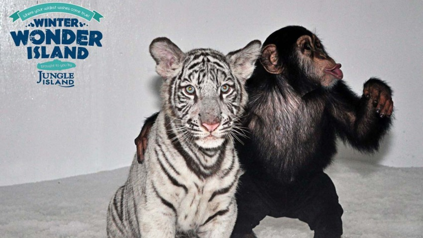 White Tiger and Chimp