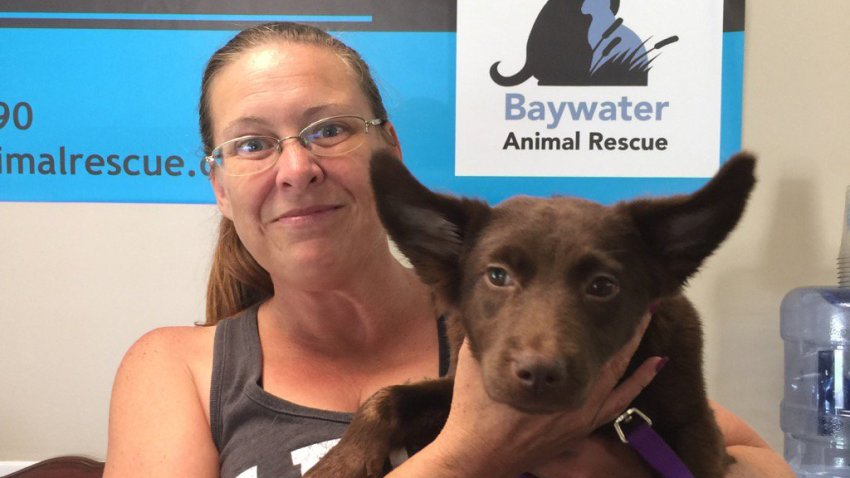 baywater_animal_rescue