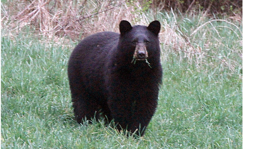 Bear Hunt Big Year