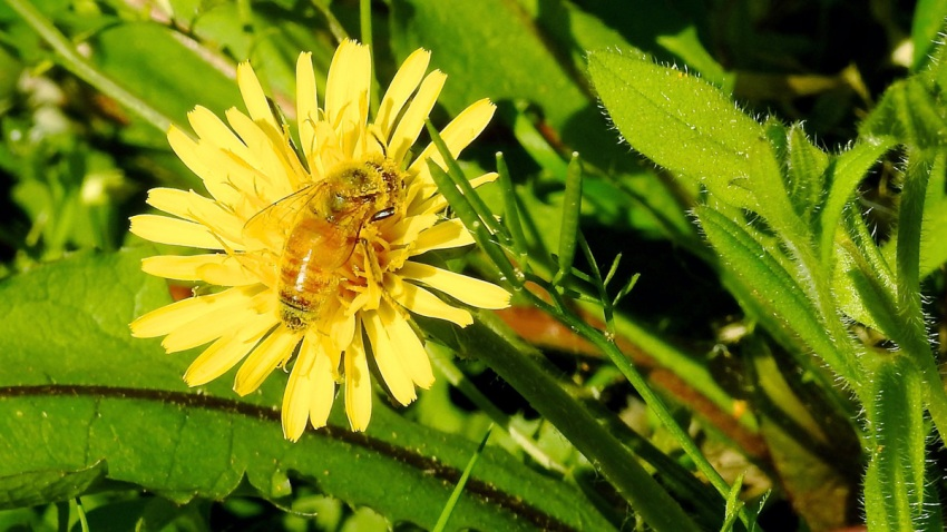 Gardening Bee Lawns