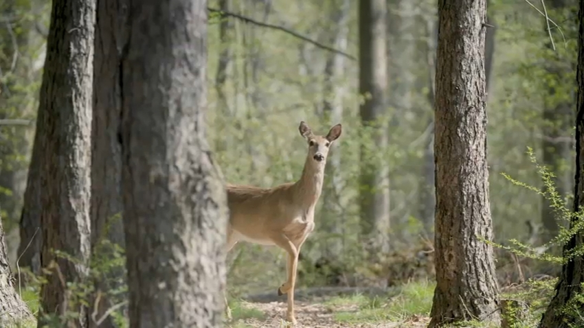 deer strike 110619