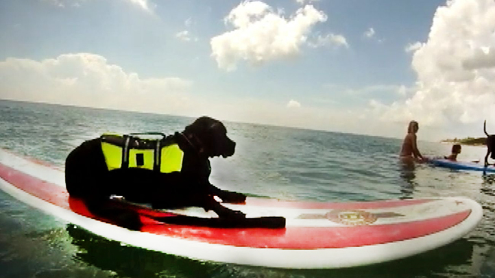 dog_surfing_fl