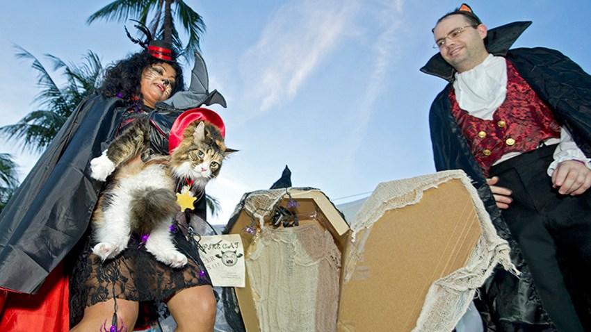fantasy fest vampire cat