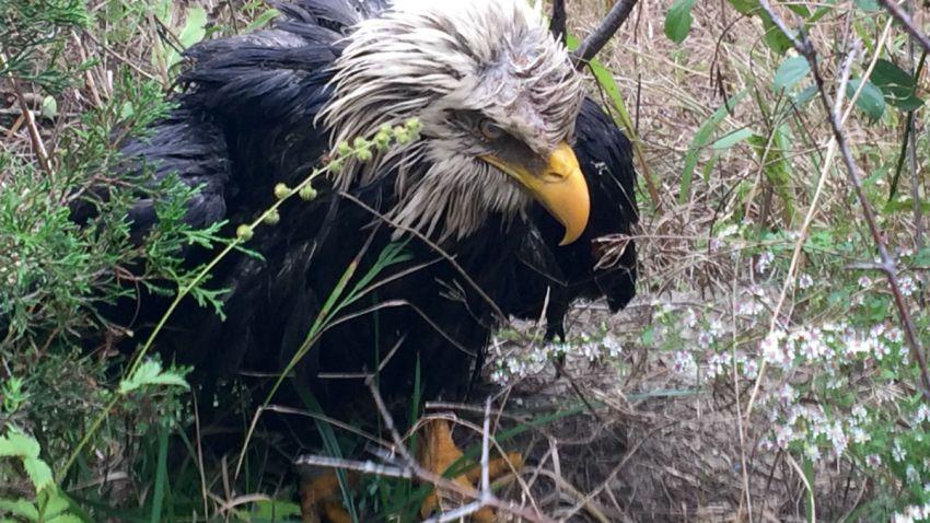 i55 eagle1
