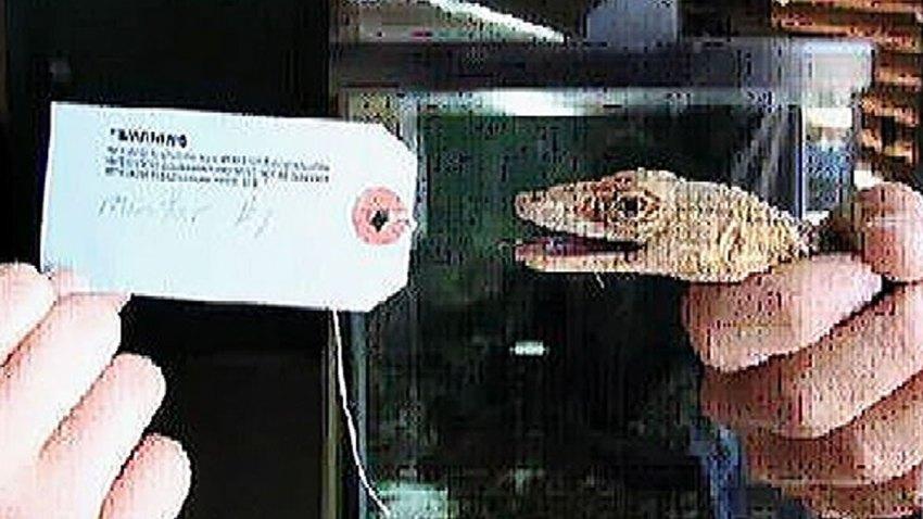 lizard-schultz-us-atty-office