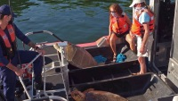 Coast Guard Helps Release Two Rehabilitated Sea Turtles Off Florida Keys