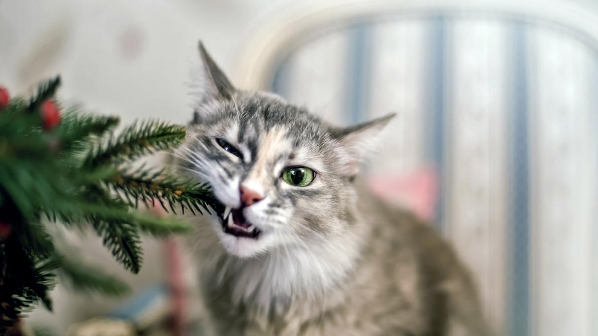 pets holidays jpg?resize=1200,675.