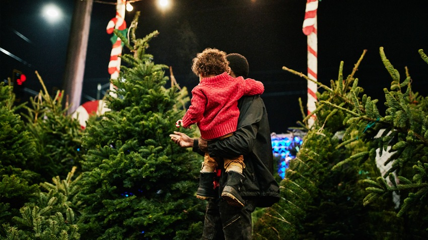 Tips For Choosing and Keeping a Fresh Christmas Tree in Florida – NBC 6 South Florida