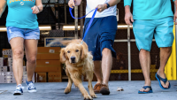 Holiday Miracle: 20 Golden Retrievers Arrive in Miami After Being Rescued in China