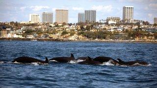Killer Whale Spotting