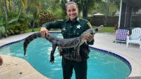 Florida Deputy Kicks Alligator Out of Backyard Swimming Pool