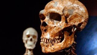 Human Neanderthal DNA