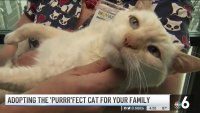 Clear The Shelters: Adopting The 'Purr'fect Cat For Your Family