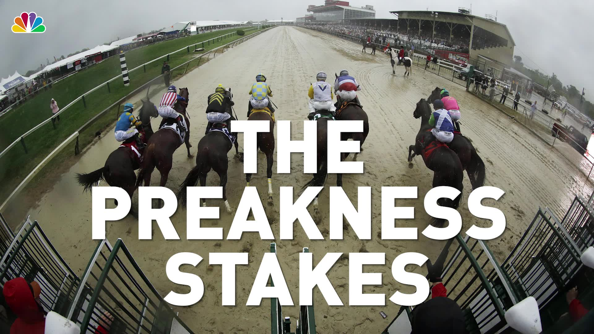 7 Ways to Fake Horse Racing Expertise   NBC Connecticut