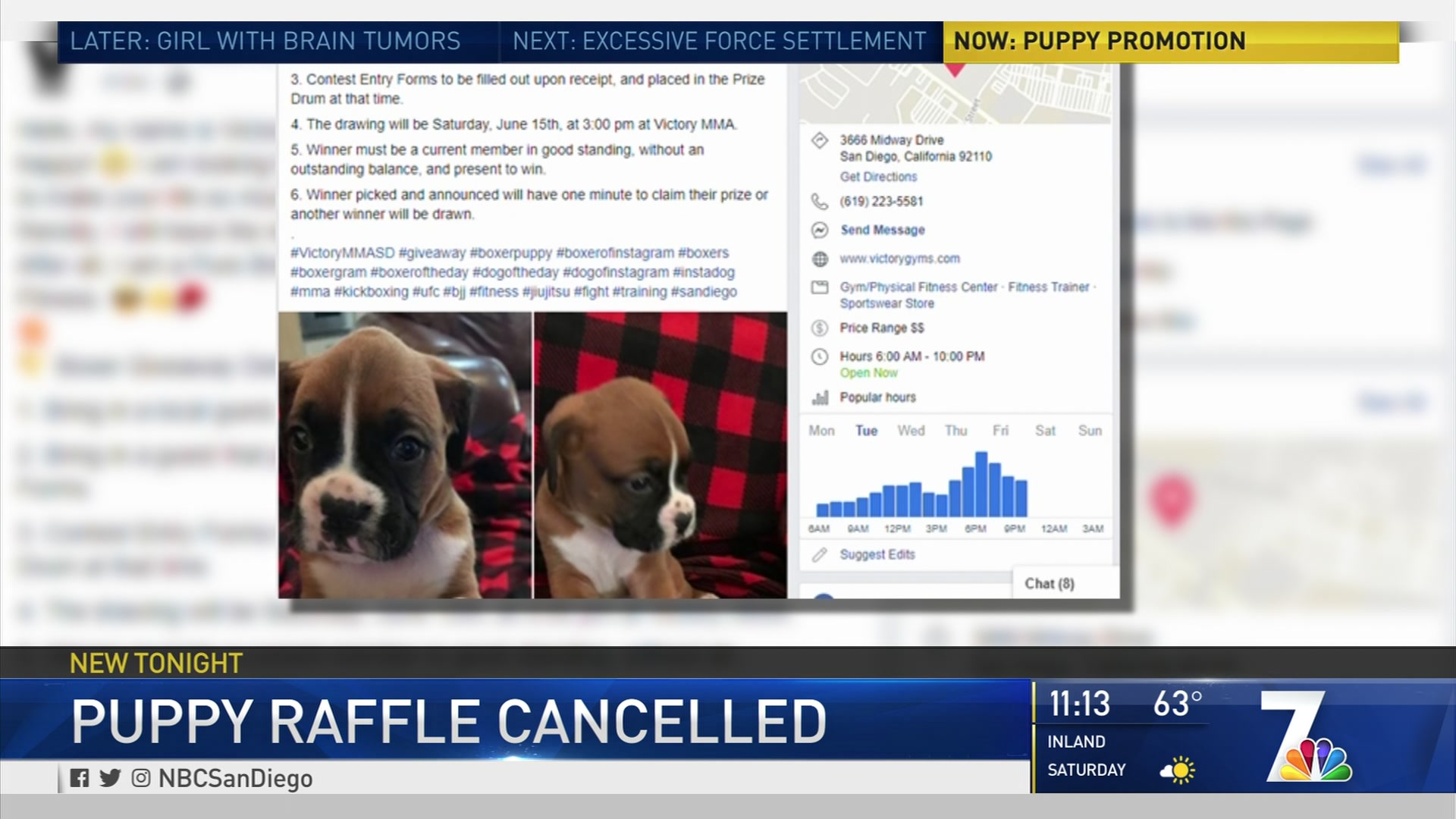 MMA Gym Stops Puppy Prize Raffle After Facing Community Backlash