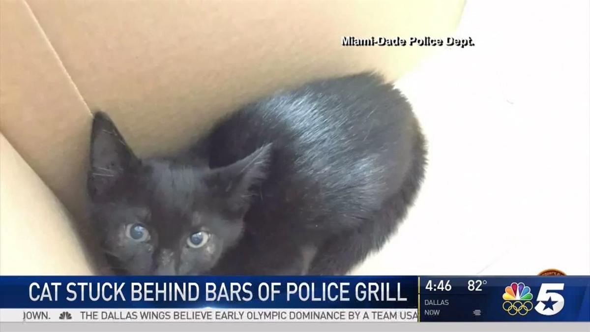 Kitten Pulled from Patrol Car Hood