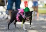 Brazil Pet Carnival