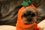 Halloween Hazards and Your Pets