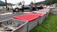 Alaska-Salmon Spill