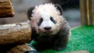 panda-885300880