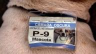 Cuba Official Street Dogs