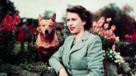 Royal Corgis 1953