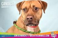 Humane Society of Broward County Pets of the Week - Feb. 14