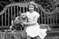 Royal Corgis 1936