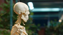 humanskeleton_1200x675 Scientists Say They've Discovered a New Human Organ
