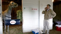 stud-tapit Breeding Is a Billion-Dollar Business