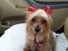 South Florida Celebrates National Dog Day!