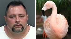 Fla. Man Accused in Beloved Flamingo's Death Killed by Truck